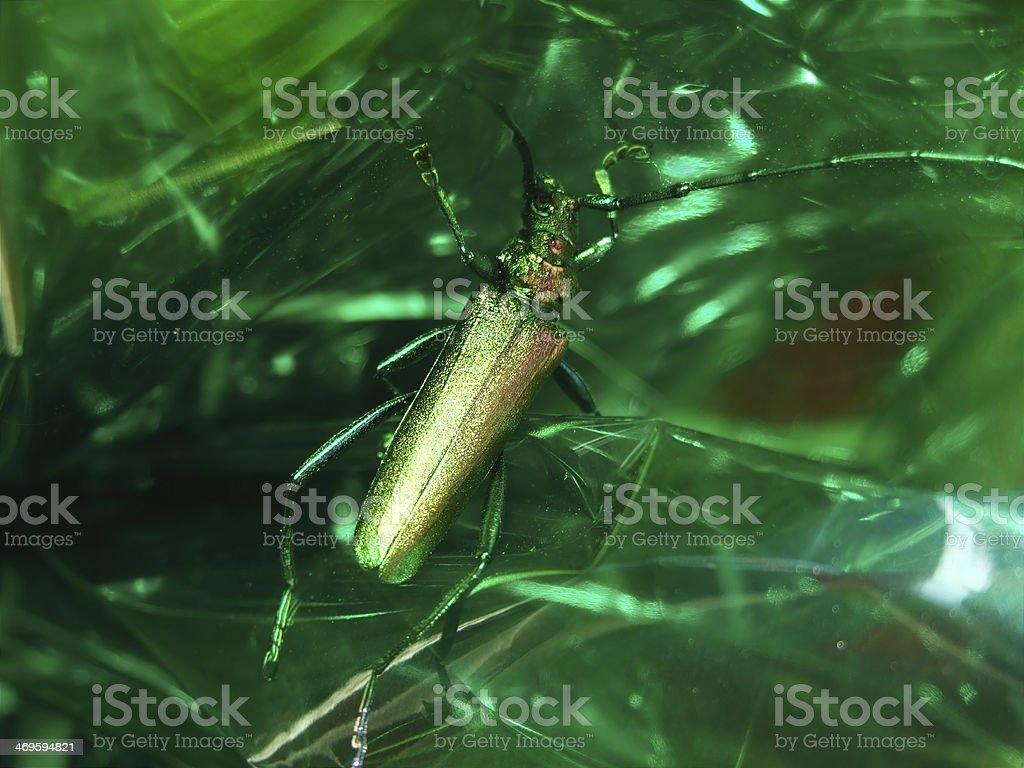 Green bug stock photo