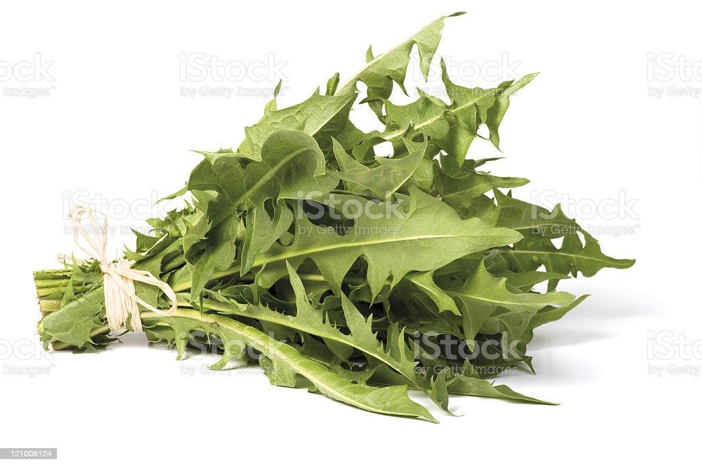A green bundle of dandelion greens stock photo