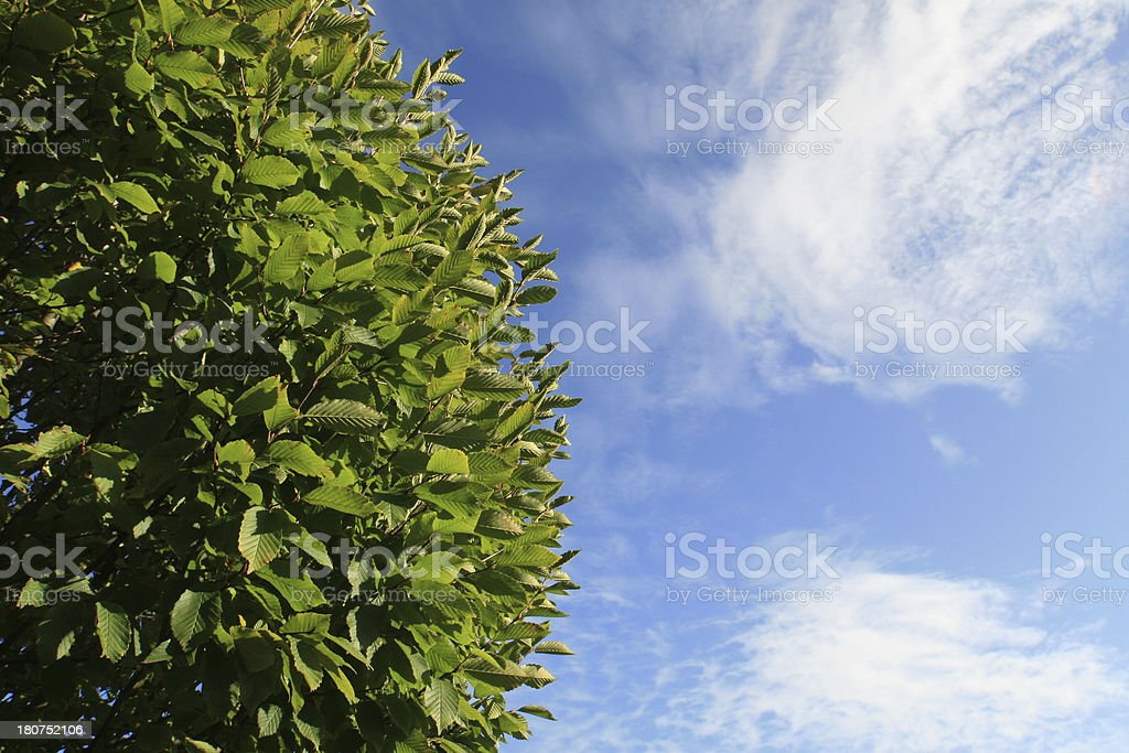 Green bush against blue sky royalty-free stock photo