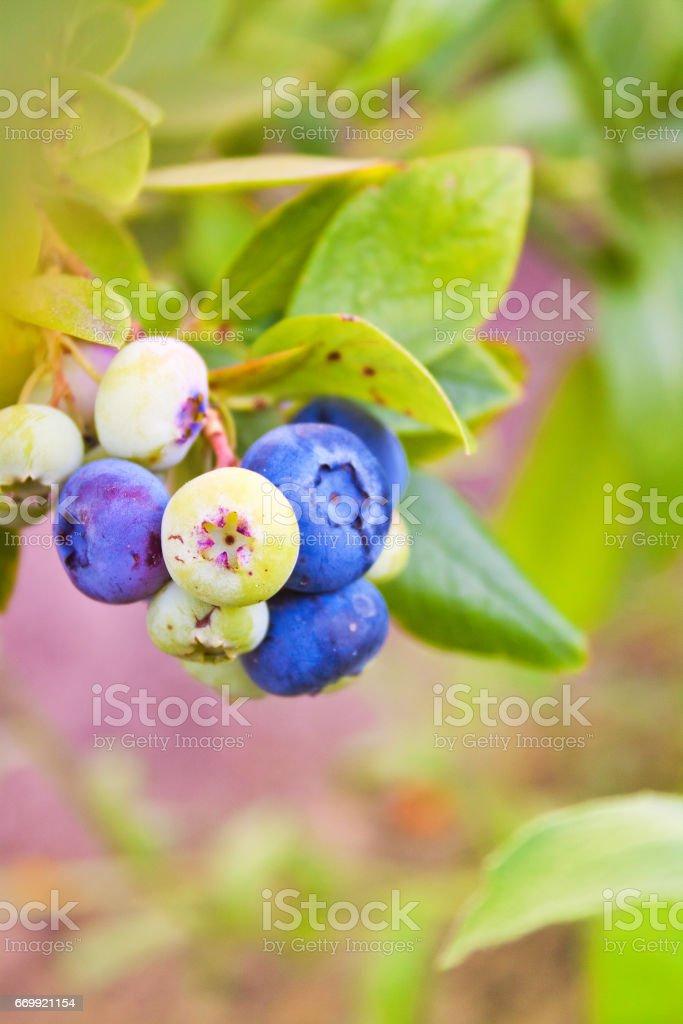 green bush, summer day stock photo