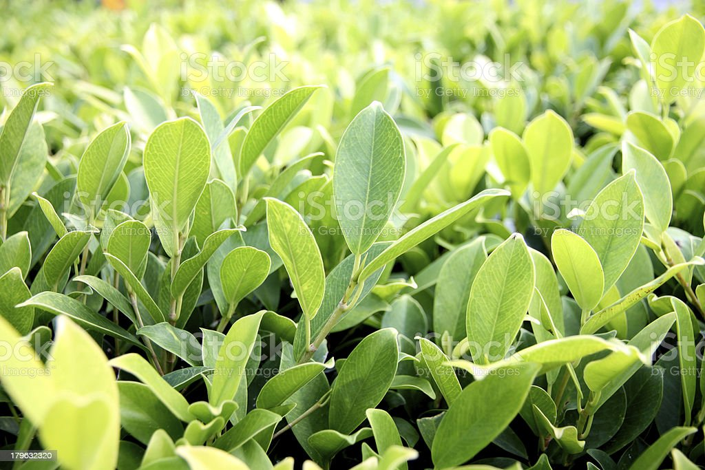 Green bushes. royalty-free stock photo