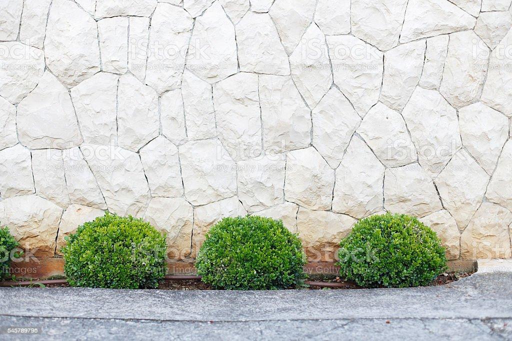 Green bushes stock photo