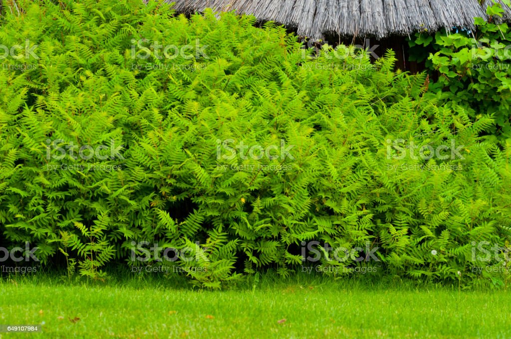 green bushes stock photo