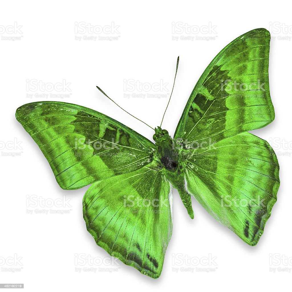 Green butterfly royalty-free stock photo