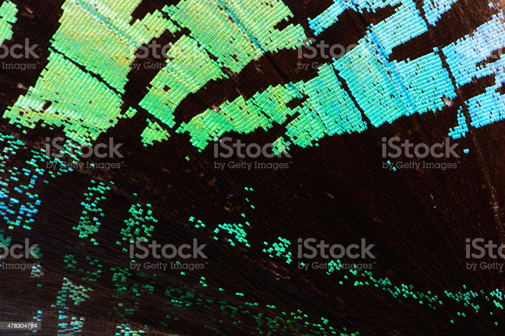 green butterfly wing stock photo