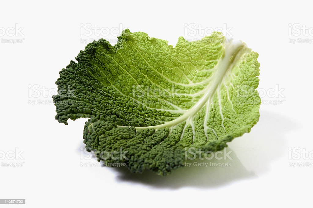 green cabbage leaf royalty-free stock photo