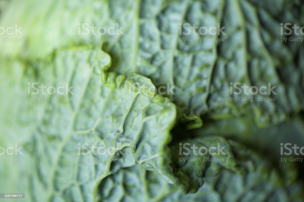Green Cabbage royalty-free stock photo