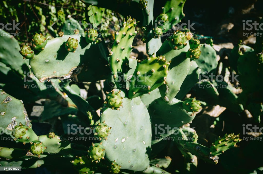 Green cactus abstract pattern. stock photo