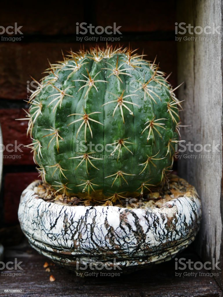 green cactus close up stock photo