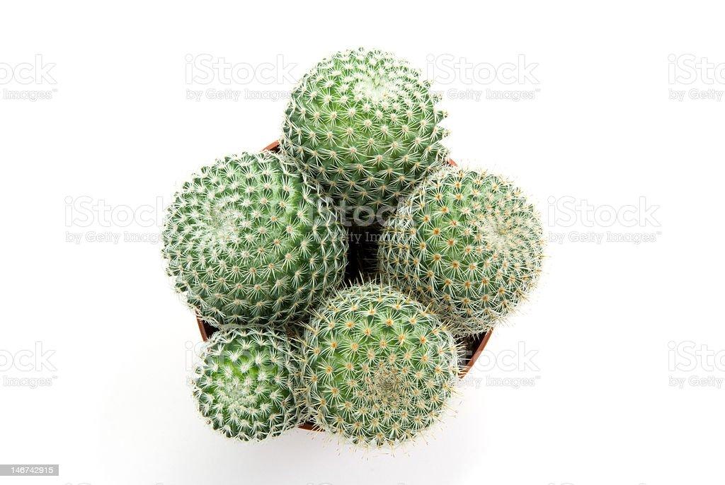 Cacto Verde foto royalty-free