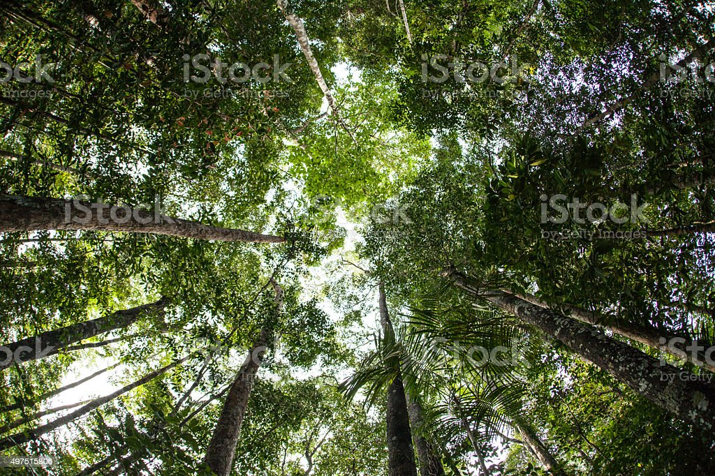 Green Canopy of Rainforest stock photo