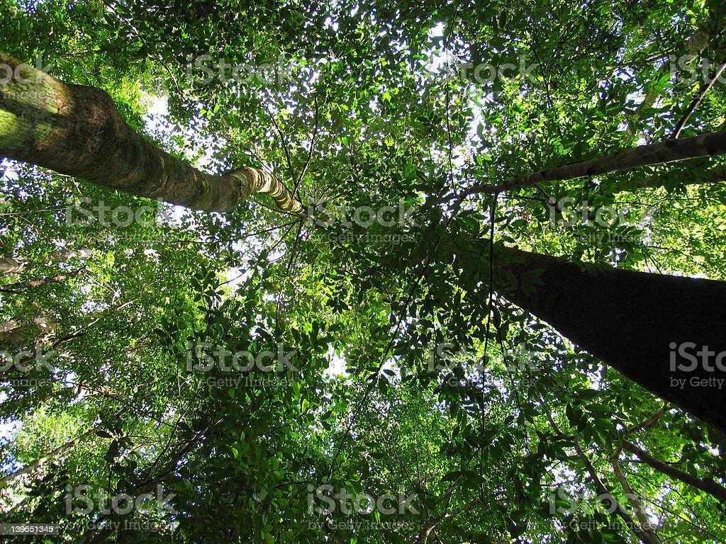 Green Canopy royalty-free stock photo