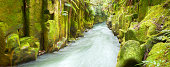 Green canyon Whaiti-Nui-A-Toi in New Zealand