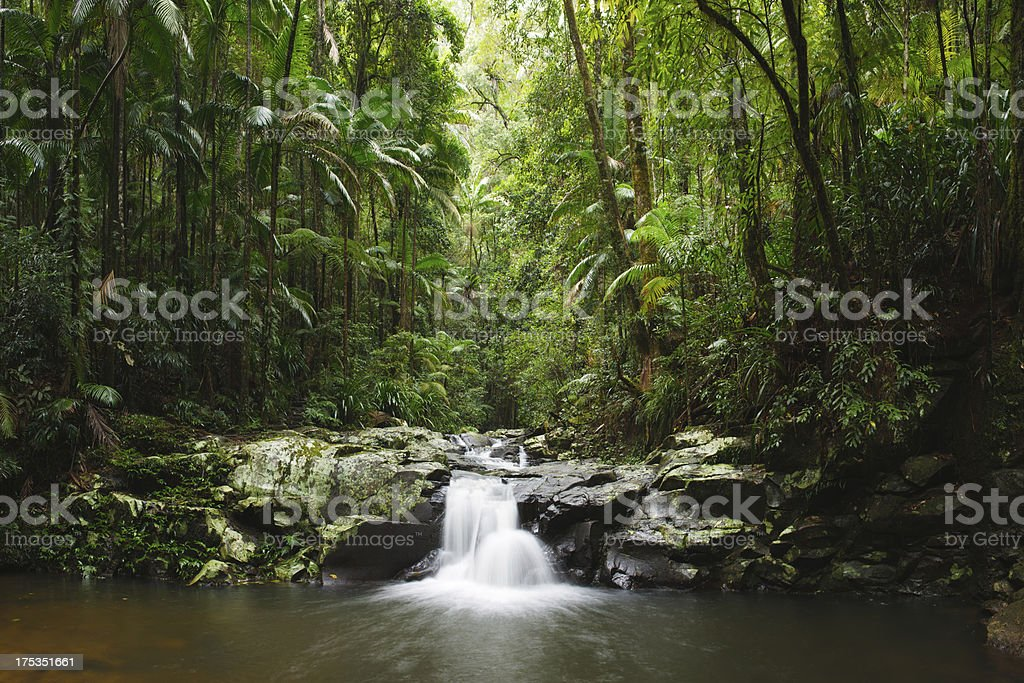 Green Cathedral royalty-free stock photo