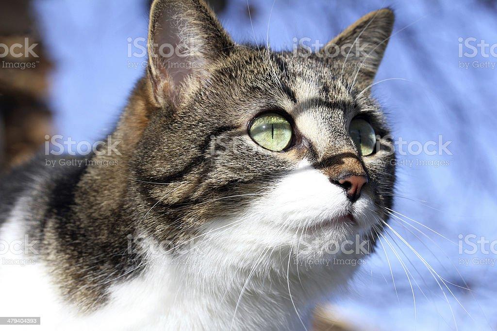 green cats eyes stock photo