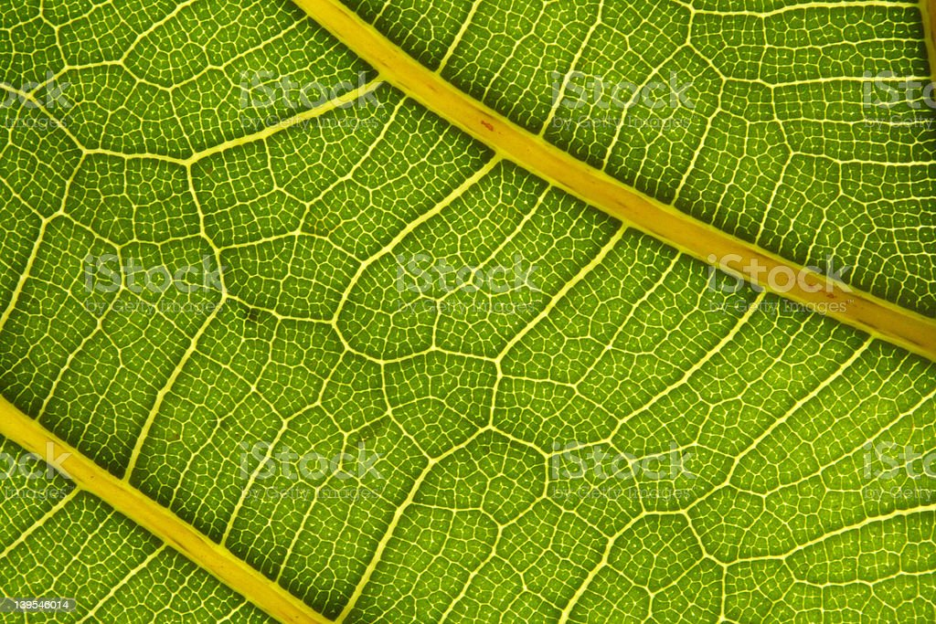green cells royalty-free stock photo