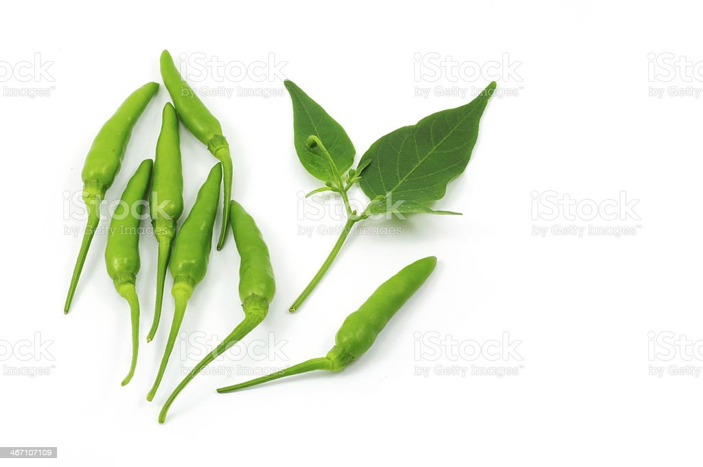 Green chili with leaf stock photo