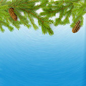 Green Christmas Fir branches with cones on blue background.