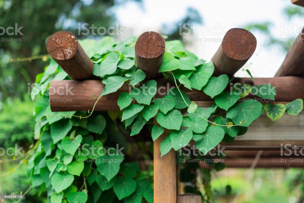 Green Climbing Plant stock photo
