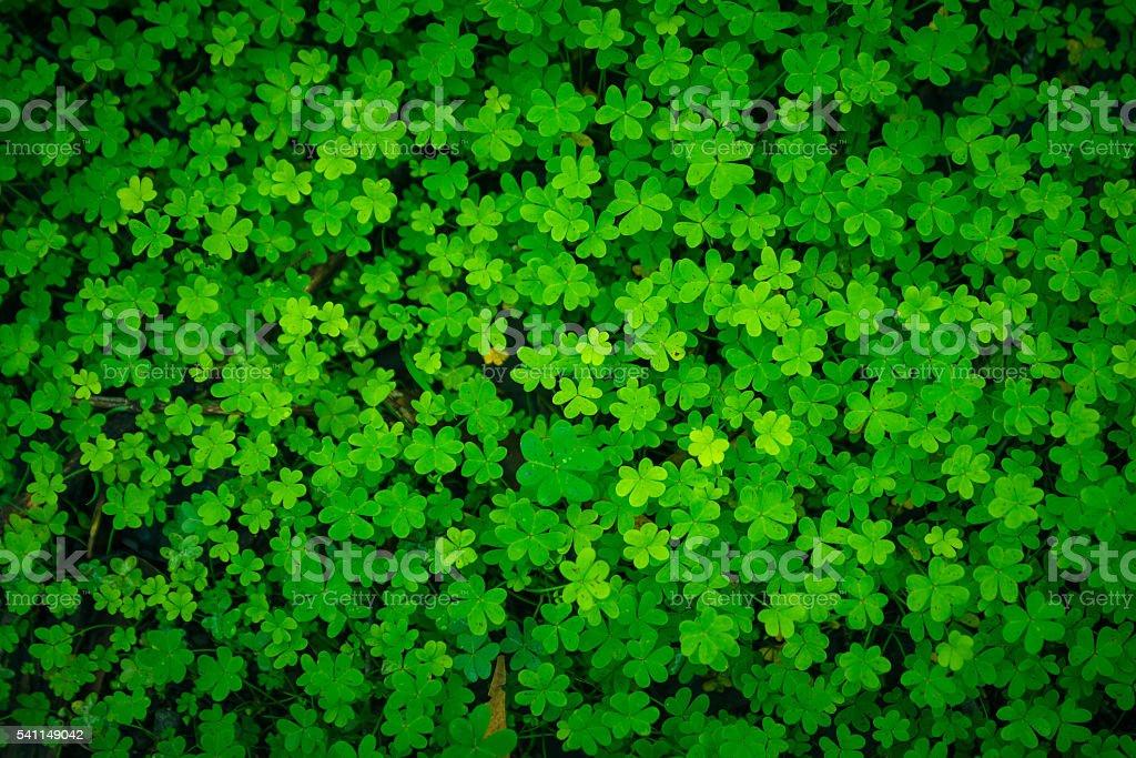 Green clover good luck Irish holiday pattern stock photo