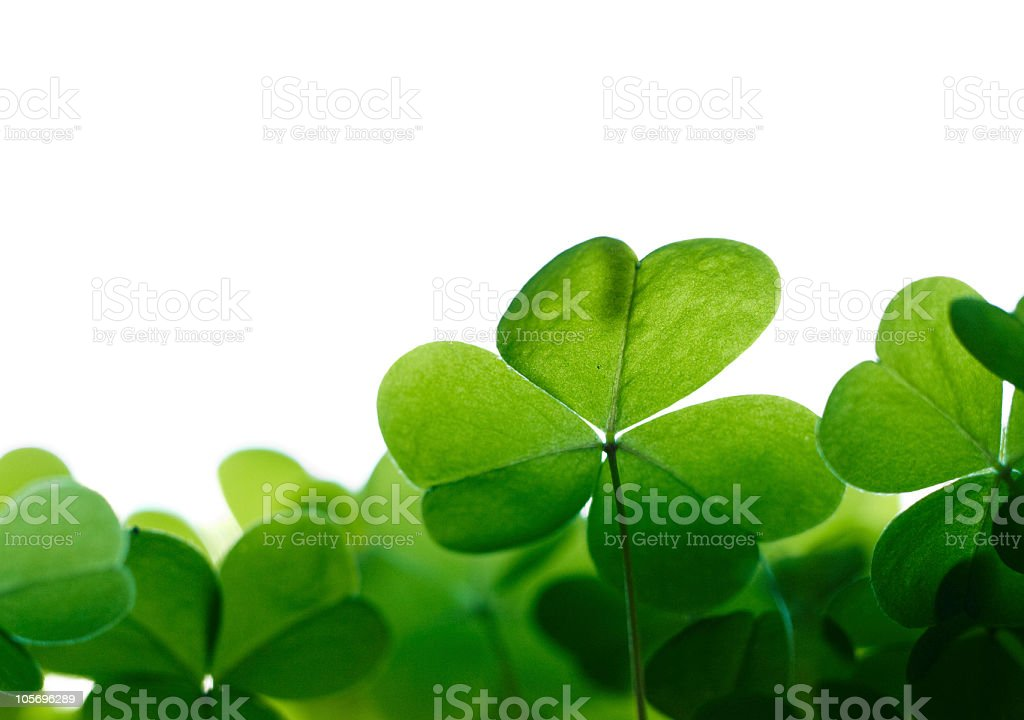 Green clover leafs border with space for text. stock photo