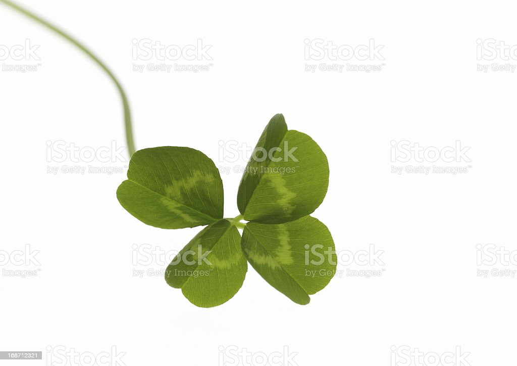 Green clover royalty-free stock photo