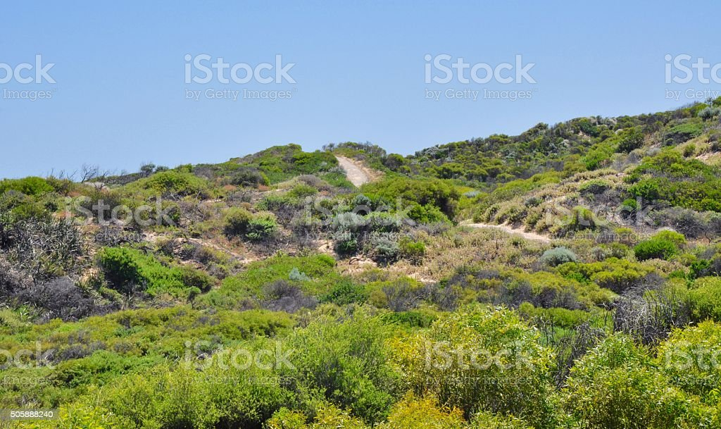 Green Coastal Dunes: Point Peron stock photo