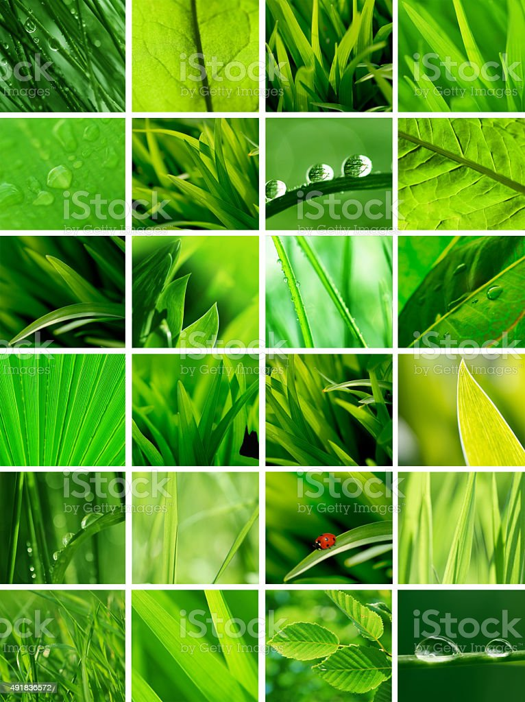 Green collage stock photo