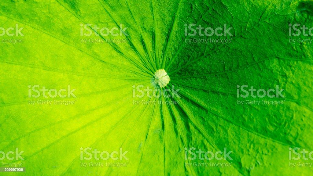 Grüne Farbe Hintergrund Lizenzfreies stock-foto