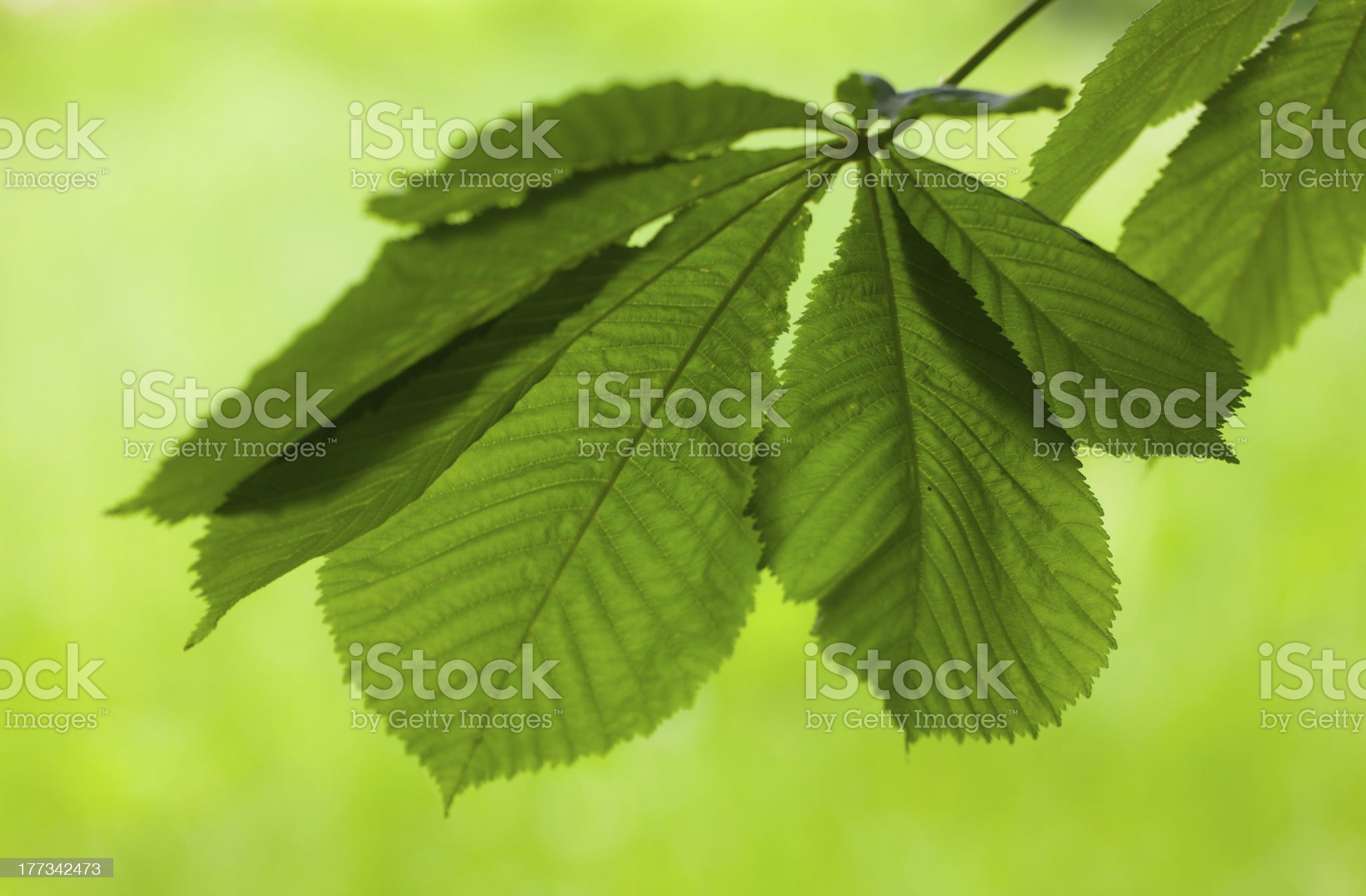 green color royalty-free stock photo
