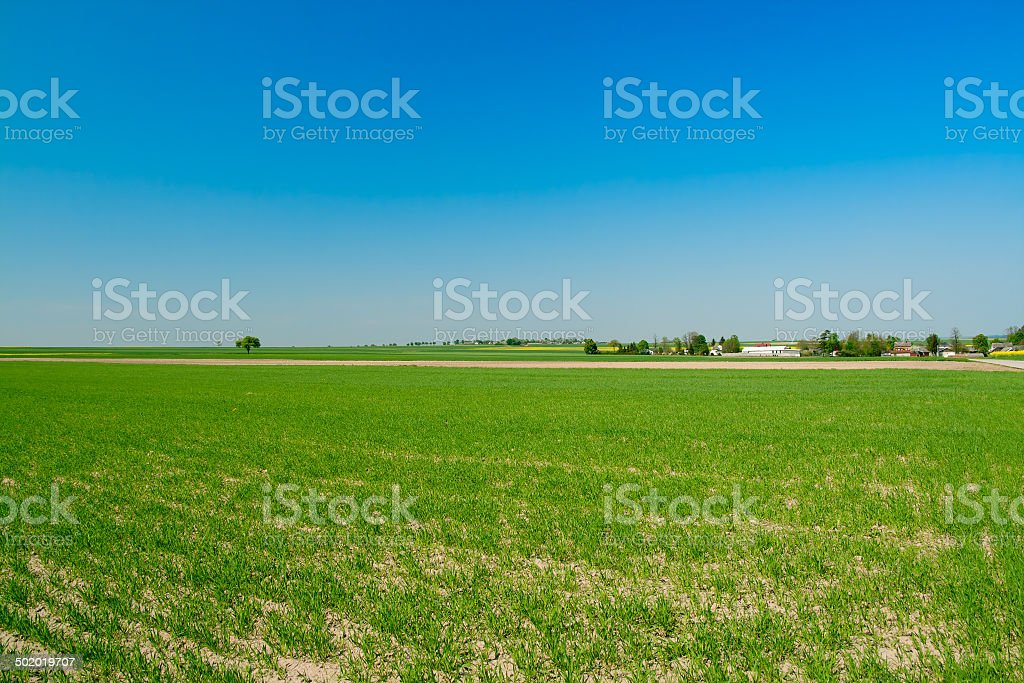 Green crop fields royalty-free stock photo