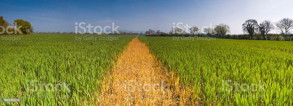 Green crop, path to horizon royalty-free stock photo