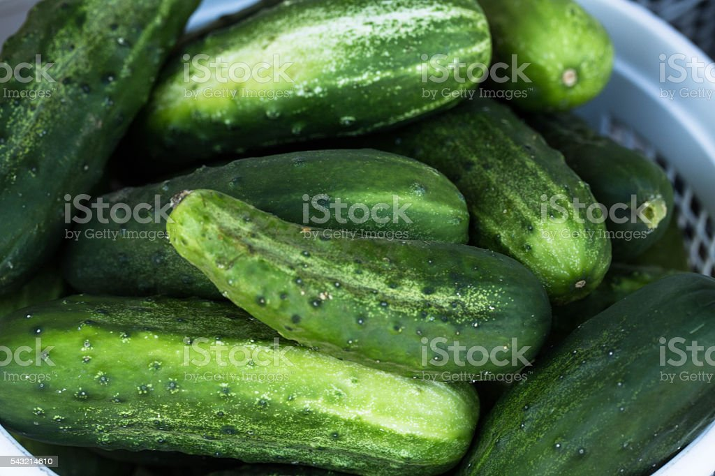 Green Cucumbers at Farmers Market stock photo