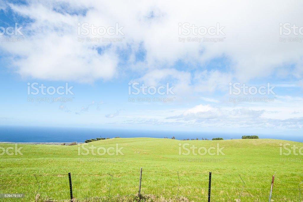 Green cultivated land and sea meet Hamakua Coast Hawaii. stock photo