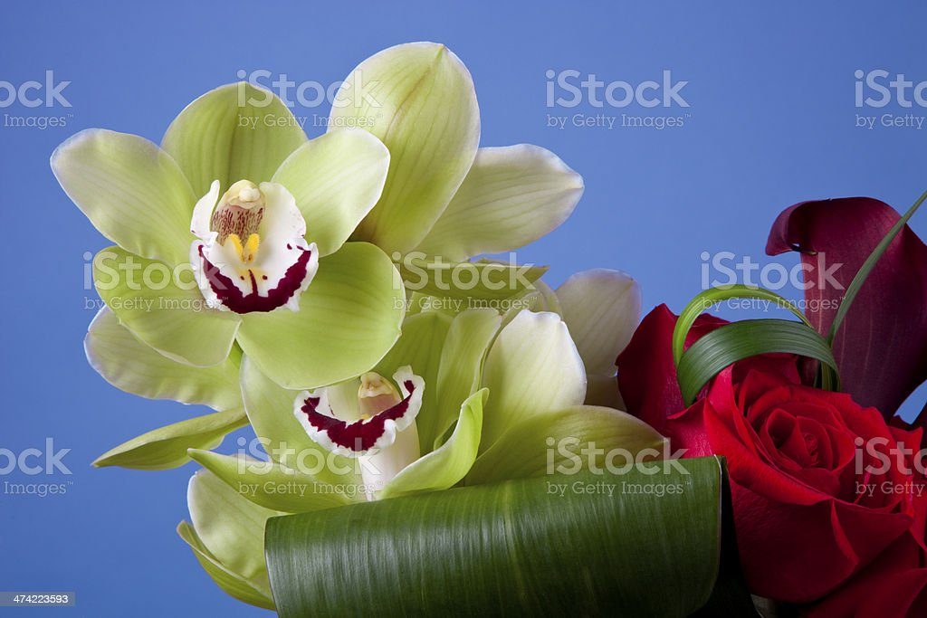 Green Cymbidium Orchids royalty-free stock photo