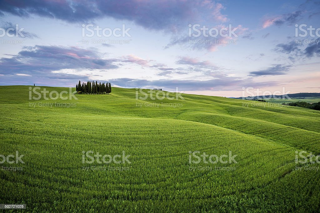 Green Cypress Hill, Val d'Orcia, Tuscany stock photo