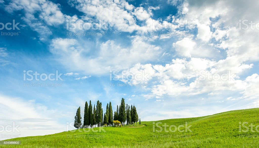 Green Cypress Hill, Val d'Orcia, Tuscany. Springtime stock photo