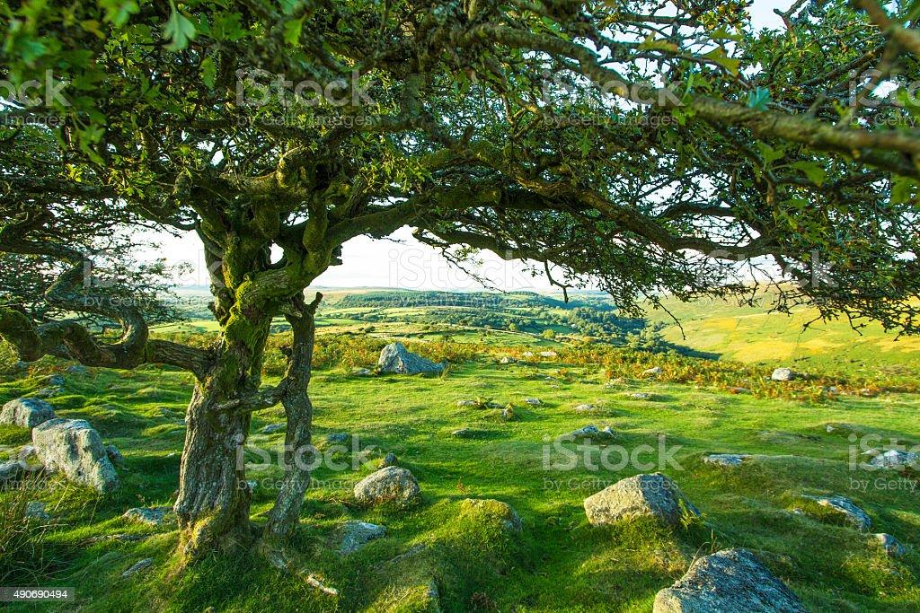 Green Dartmoor stock photo