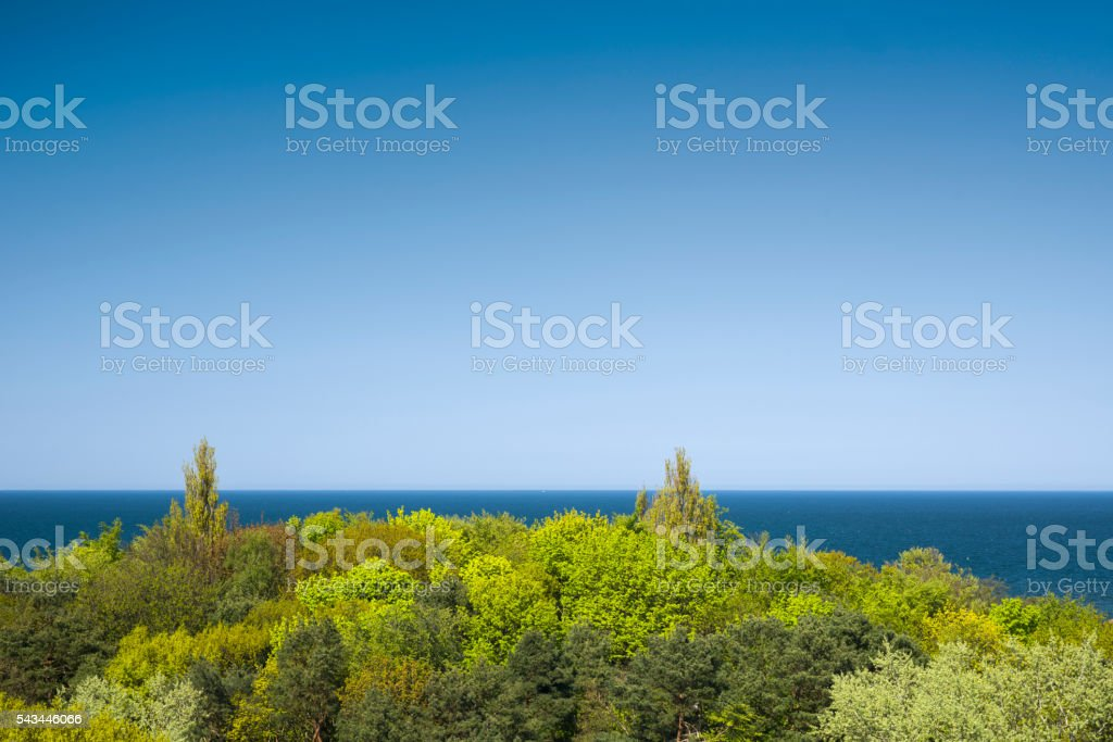 Green deciduous trees and deep blue sea under clear sky stock photo