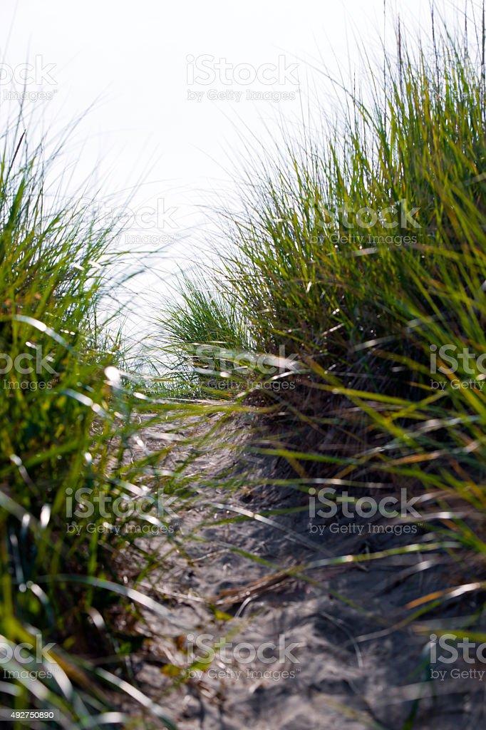 Green dense grass and pach on beach sand dune stock photo