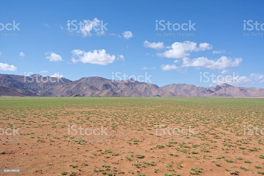 green desert stock photo