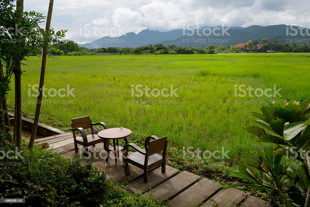 Green ear of rice in paddy rice field royalty-free stock photo
