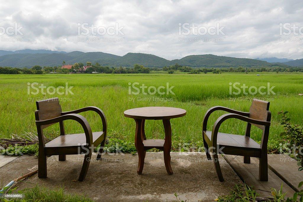 Green ear of rice in paddy rice fieldGreen ear of rice in paddy rice field royalty-free stock photo
