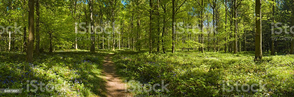 Green enchanted forest trail royalty-free stock photo