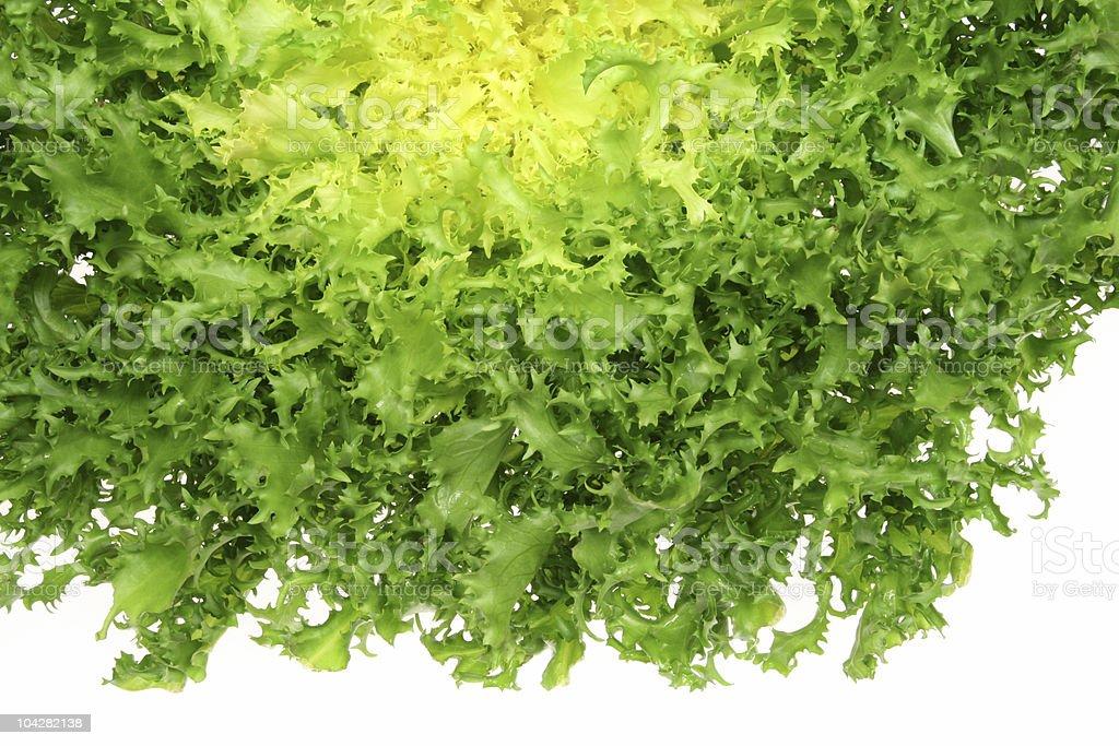 Green endive royalty-free stock photo