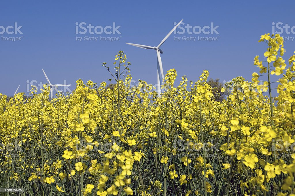 Green energy. royalty-free stock photo