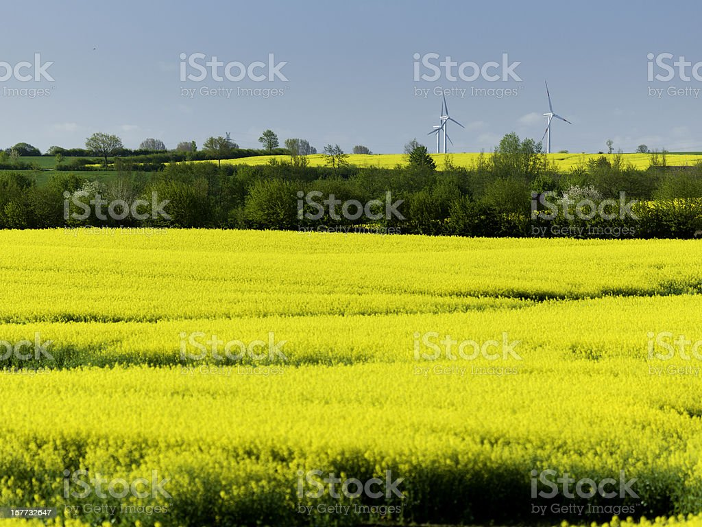 green energy, wind wheels in canola landscape stock photo