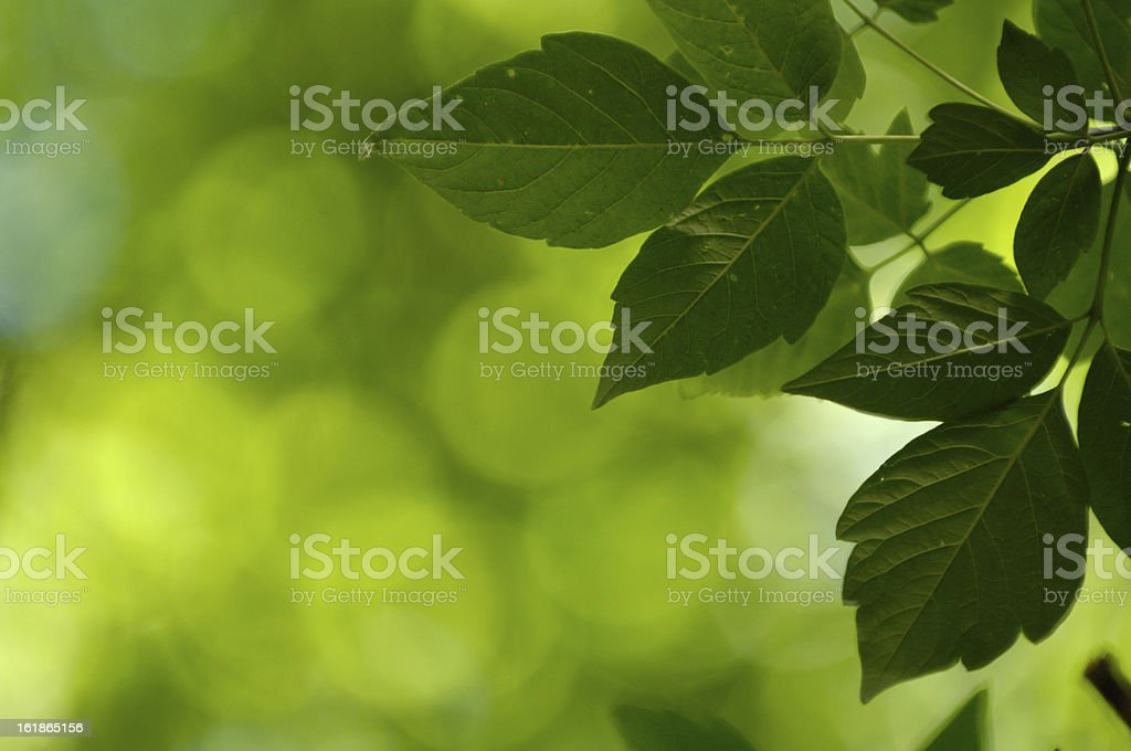 Green Environment stock photo