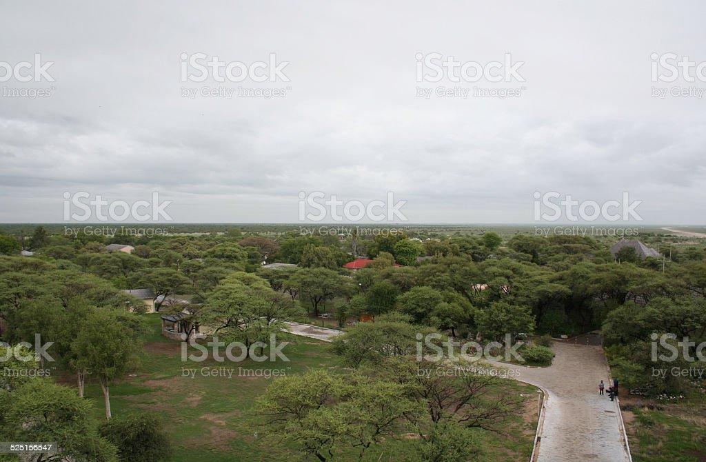 Green Etosha National Park, Rainy Season, Okaukuejo, Namibia, Africa stock photo
