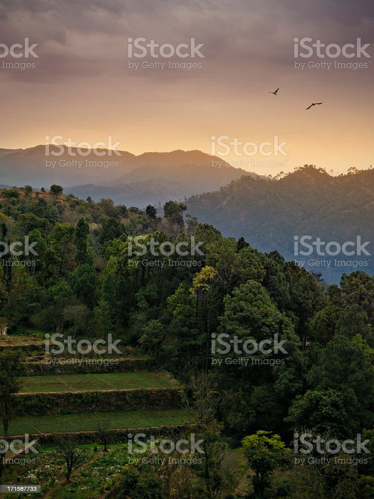 Green farming lands of Himachal Pradesh, India in early morning. royalty-free stock photo